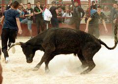 la danse du taureau ....chaud devant !!!!