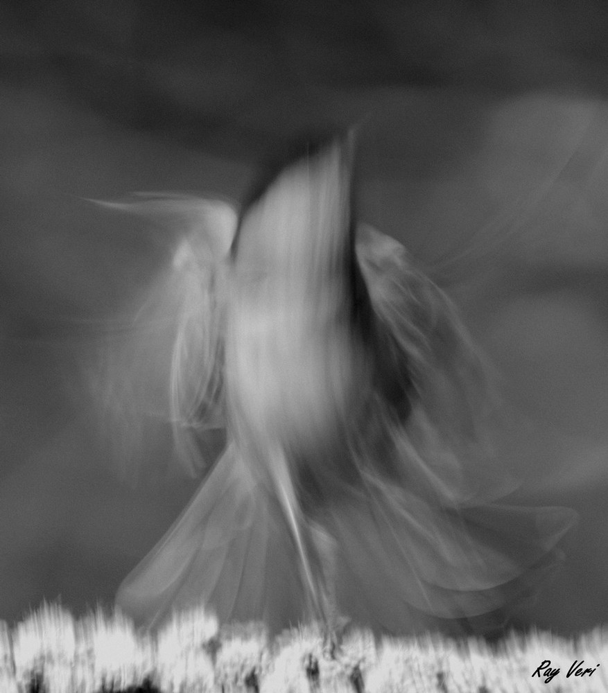 la danseuse folle