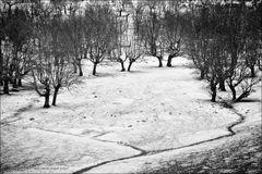 La dehesa nevada