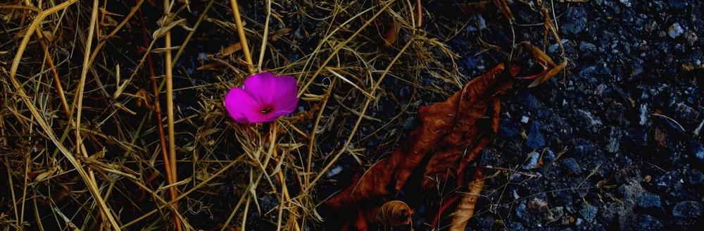 La dernière fleur de l'été