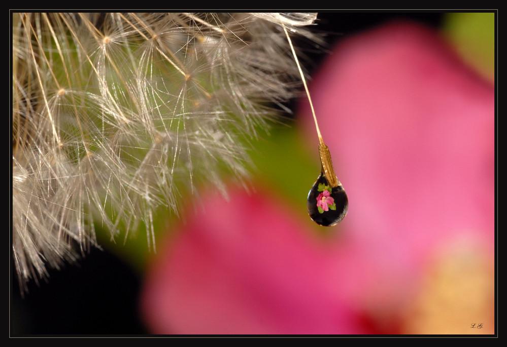 La dernière larme d'été....... !