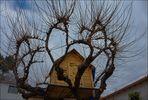 La desnudez invernal de la casa del árbol