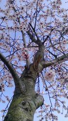 La espera de la primavera