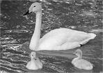 La famigliola in bianco e nero