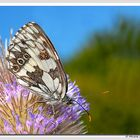 La farfalla e il fiore