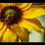 La favola delle api e dei fiori...