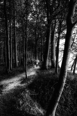 La femme au parapluie se promène dans la forêt côtière! (84)