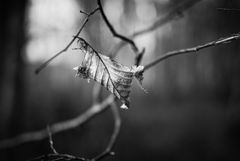 La feuille dans le vent