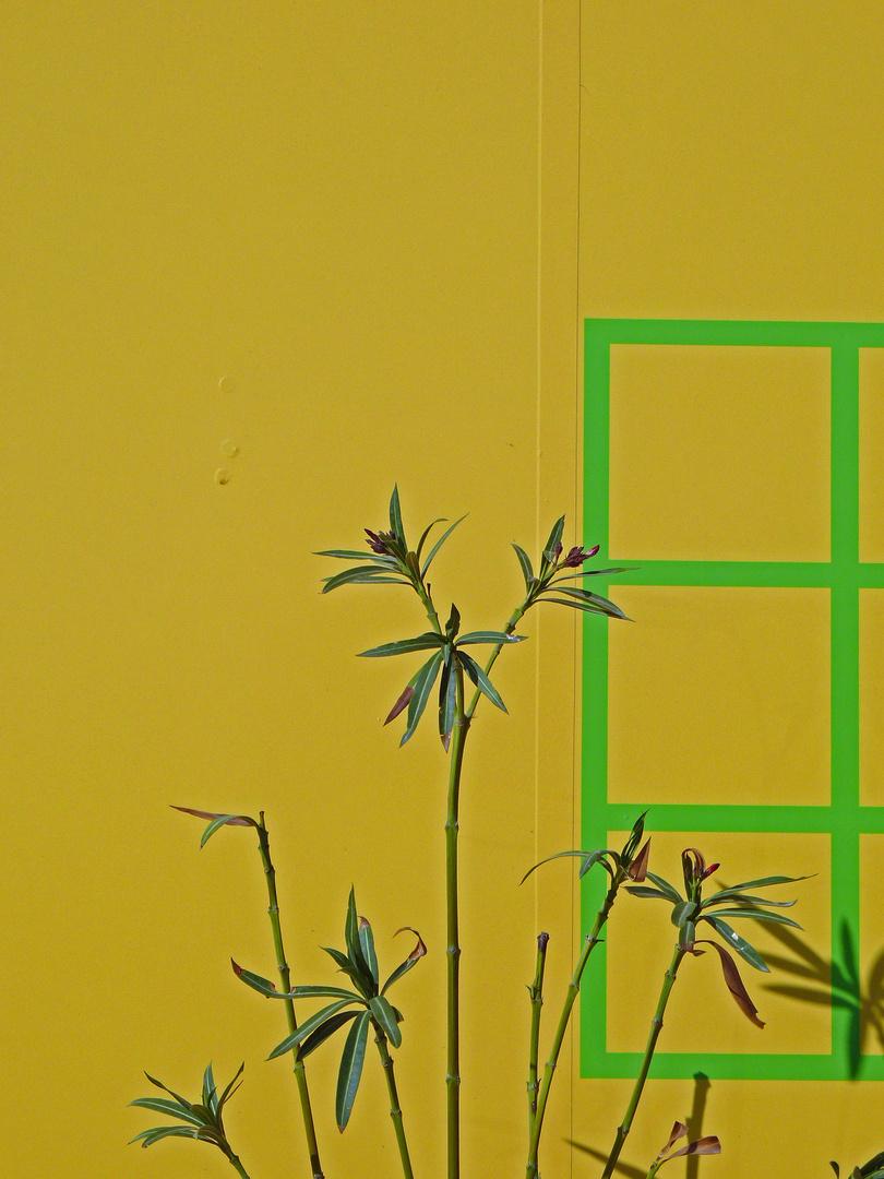 La finestra sul giardino