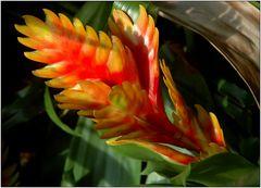 .. La fleur d'un Bromeliae ...