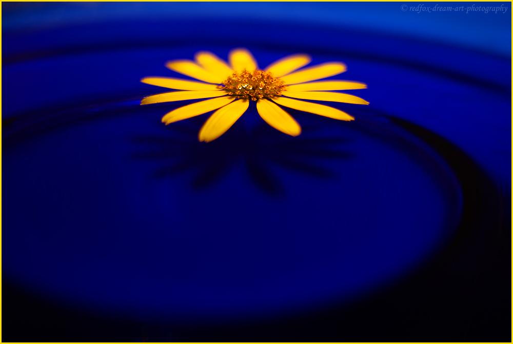 """""""la flor amarilla"""""""