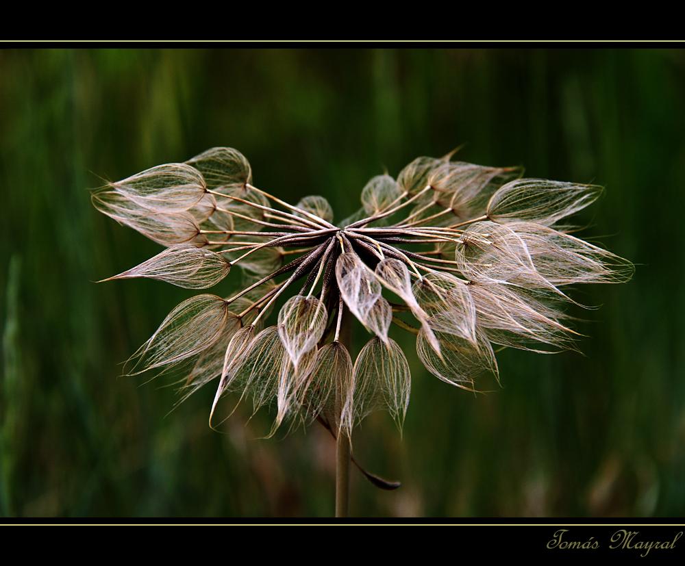La Flor de Otoño