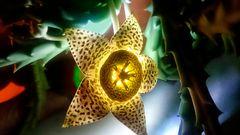 La flor del cactus con luz propia