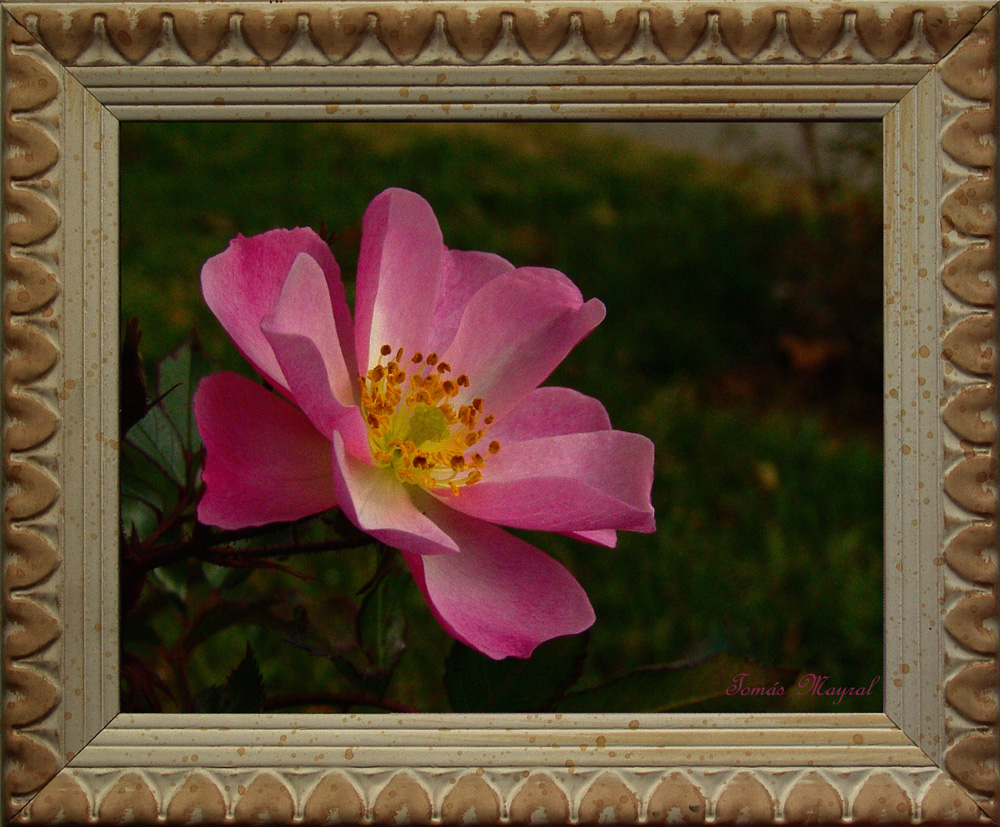 La Flor Pintada