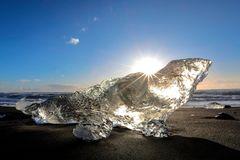 la foca di ghiaccio