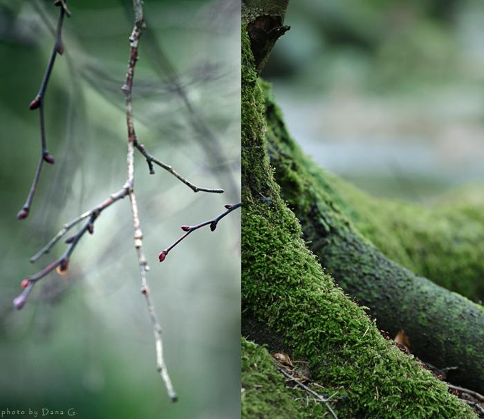. la foresta .