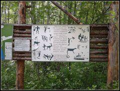 la foresta dei petroglifi