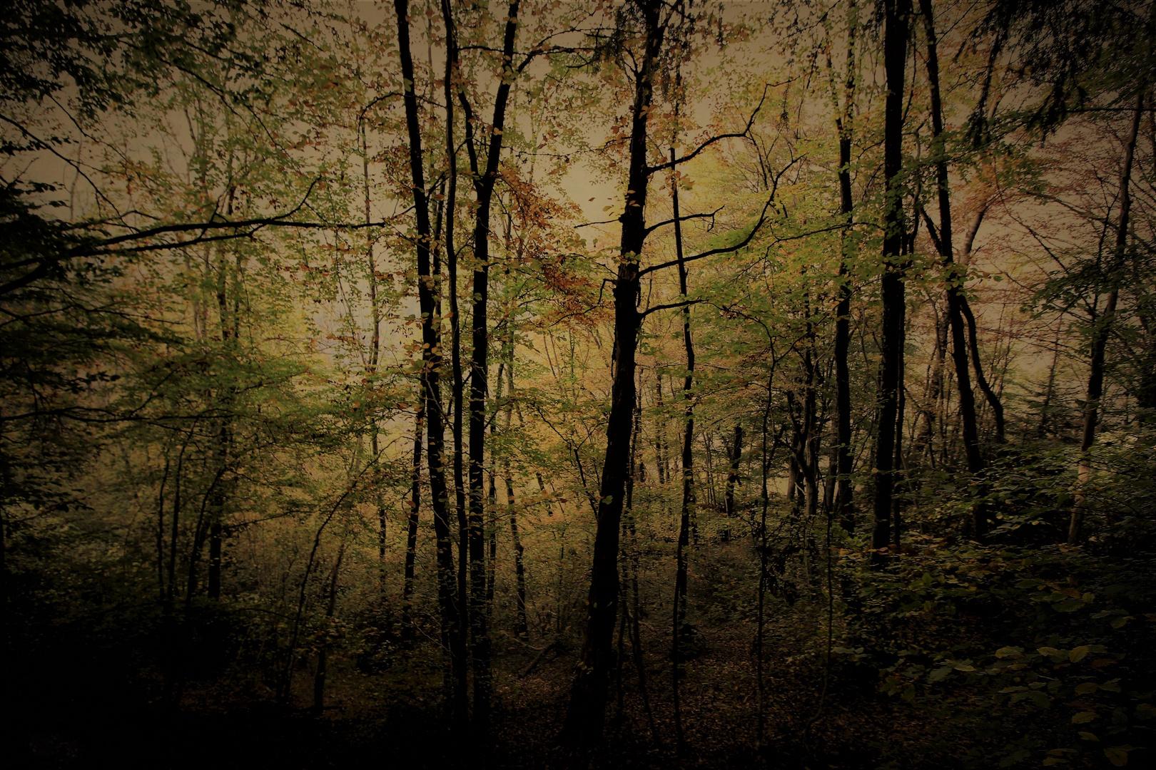 la foresta delle forme  mutanti