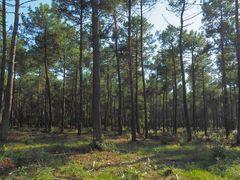 la-forêt-des-landes -Atelier 5-06-2020