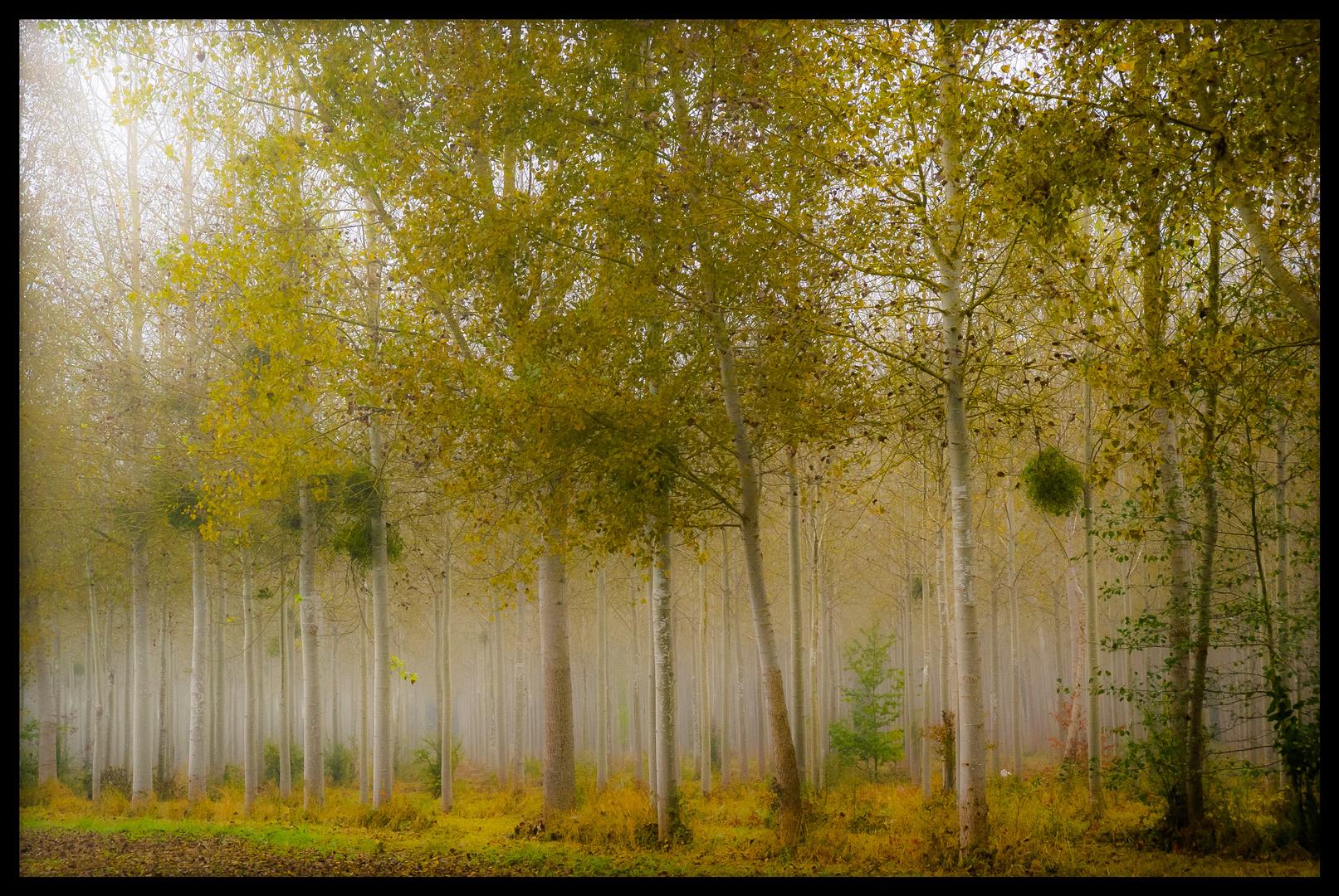 La forêt ensorcelée