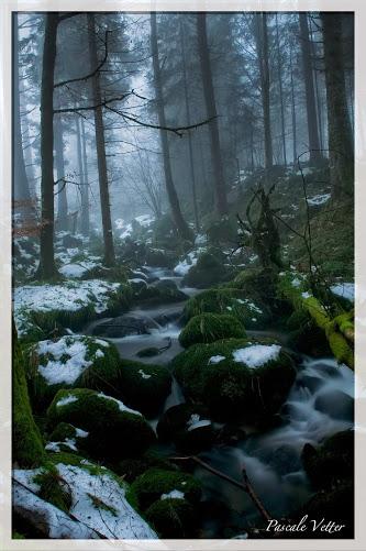 la forêt est magique