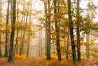 La forêt légendaire