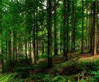 la forêt noire II