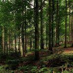 la forêt noire II - l'ambiance d'automne