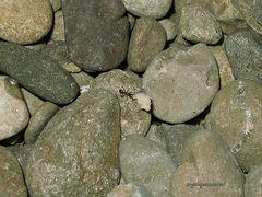 la forza delle formiche