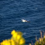 La Gabbianella ed il mare
