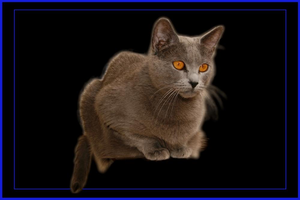 La gata azul nos vigila