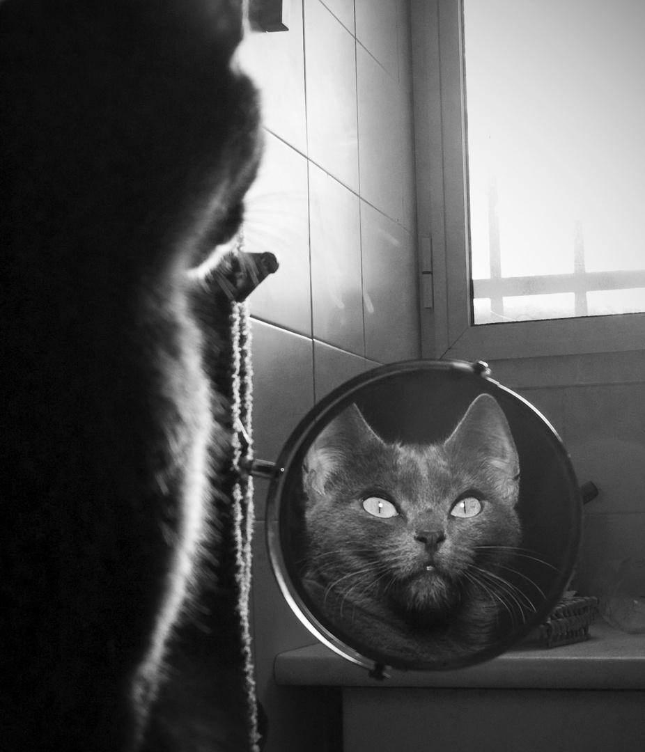 La gata y el Espejo