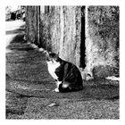 La gatta di Nasca