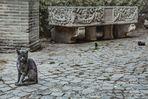 La gatta di Ostia Antica