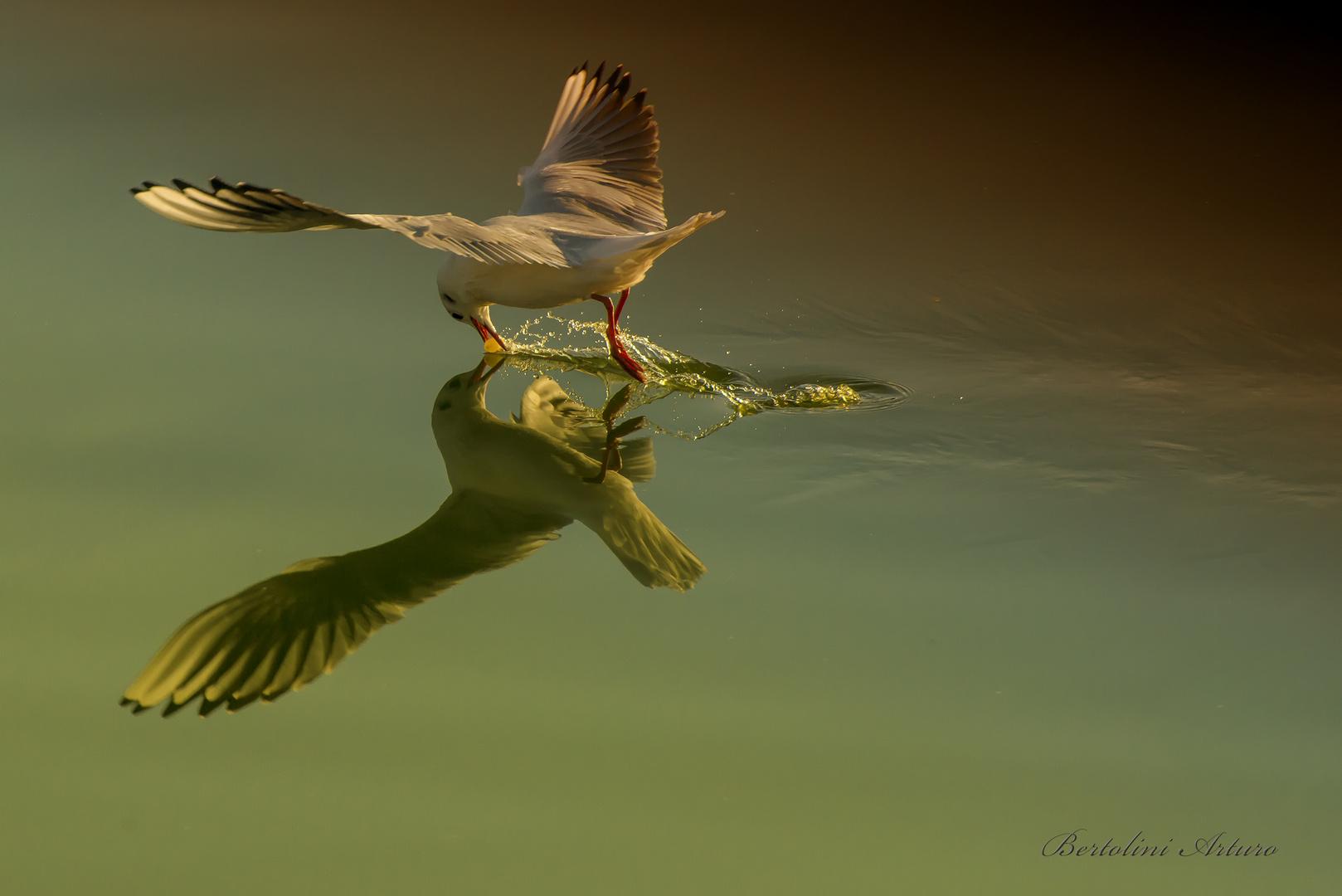 La gioia è come il volo.