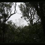 La Gomera´s  Mystic Forest