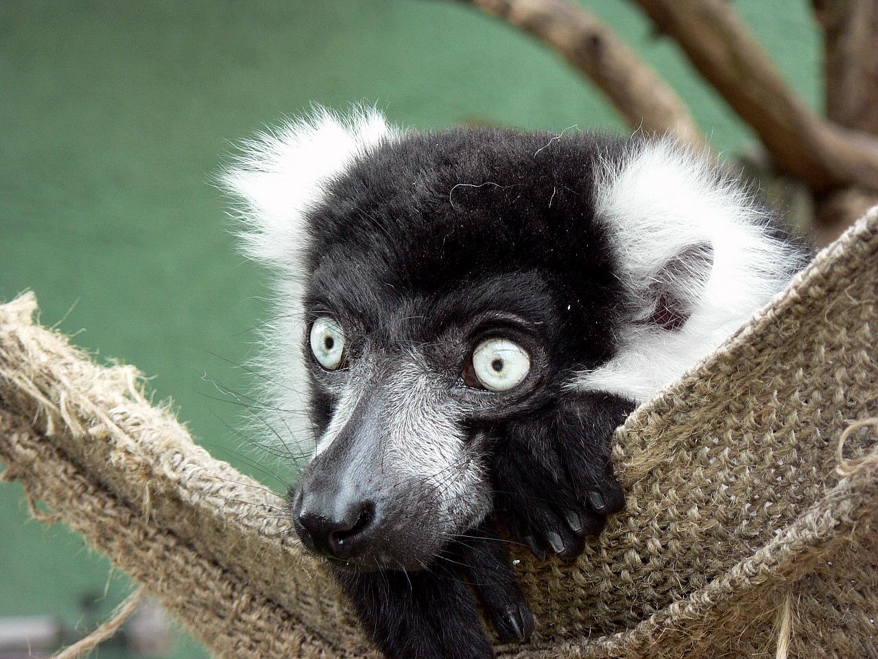 La Grande Île - Madagaskar Teil 2.