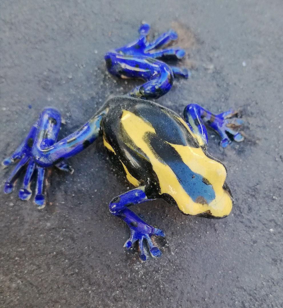 La grenouille tricolore ...