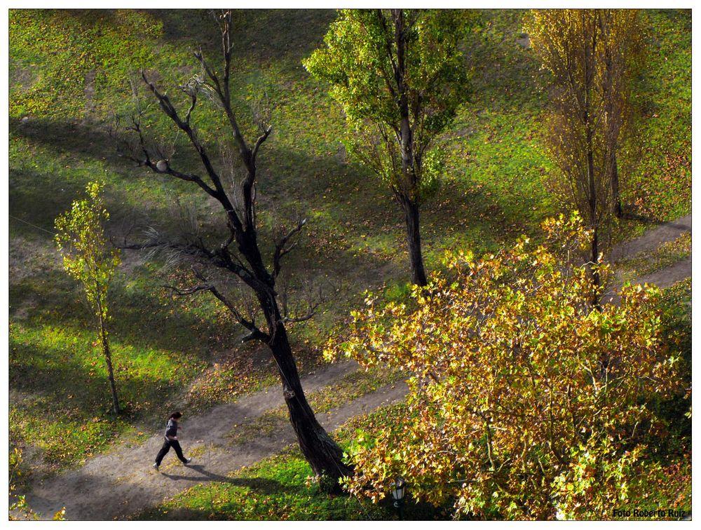 La Jungla desde arriba 1 - The Jungle from above 1