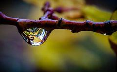 La lagrima del otoño