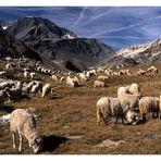 La laine fraîche