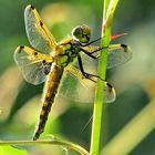 la libellule et la lumière