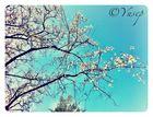 La llegada de la primavera