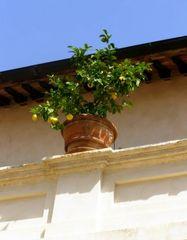 La loggia de la Villa d'Este (Tivoli - Italie)