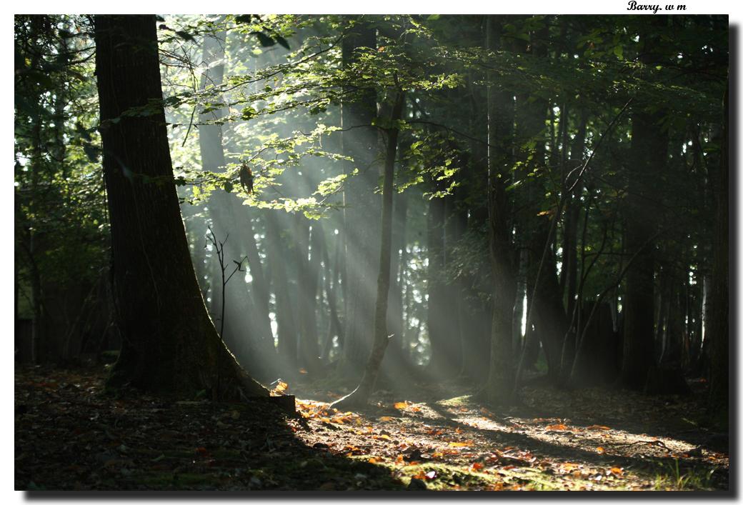 La lumière du bois