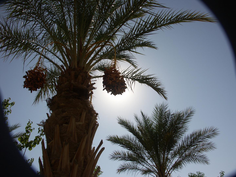 La lumière « écliptique »