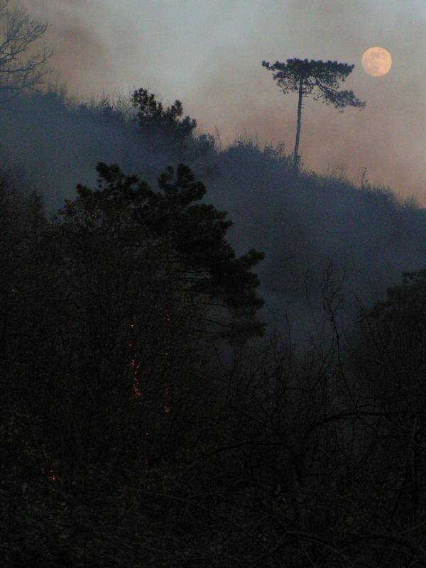 La luna sorge sul fumo del bosco in fiamme - Moon Rising through the smoke of a Forest Fire