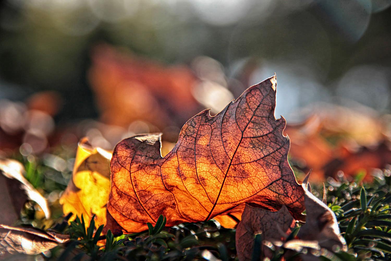 la luz del otoño