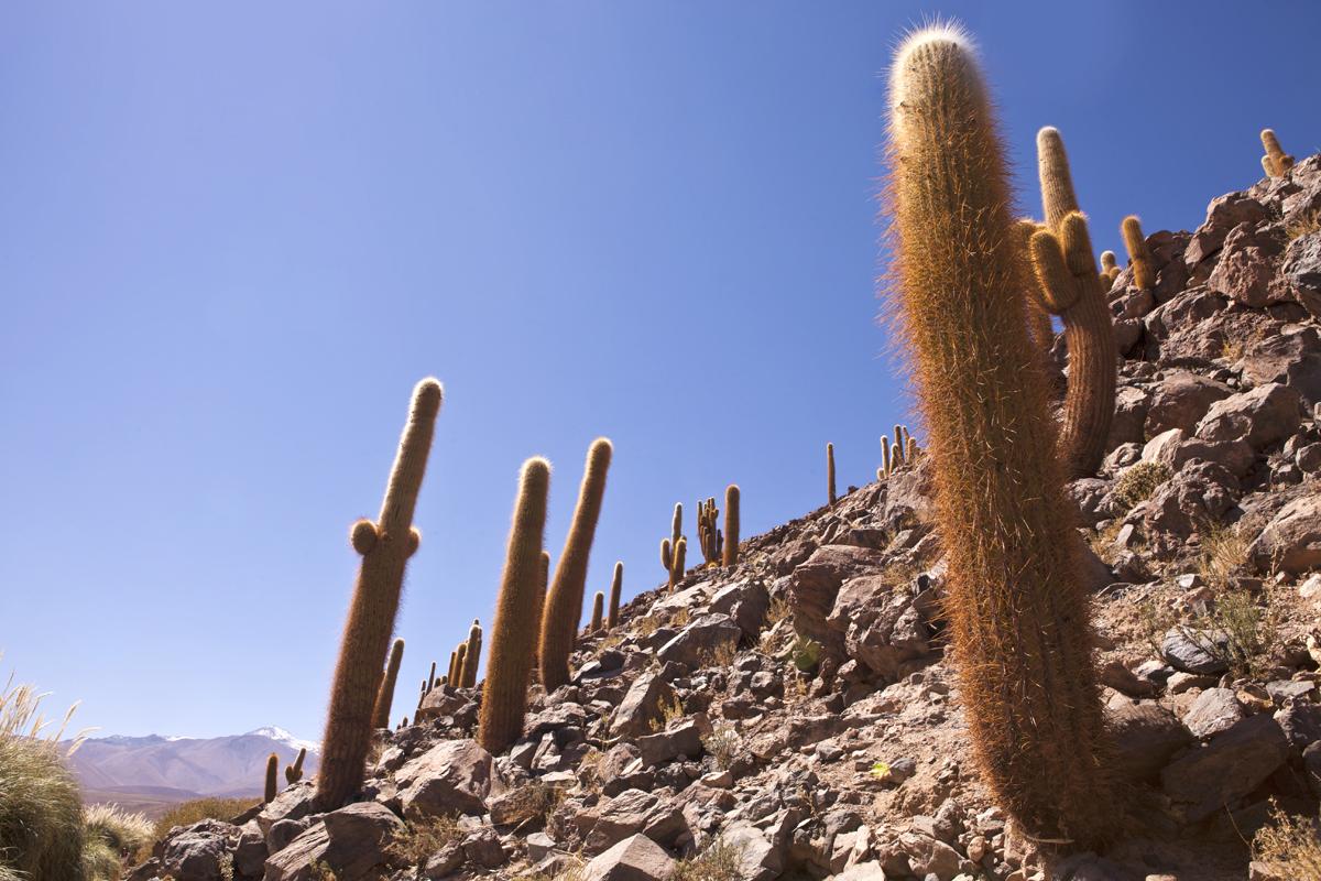 La luz se proyecta en los cactus