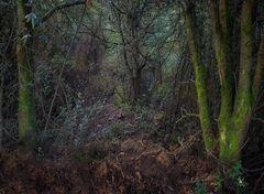 """ La luz secreta del bosque"""